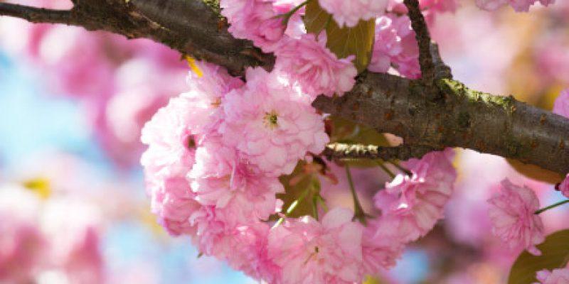 flower_pink_big